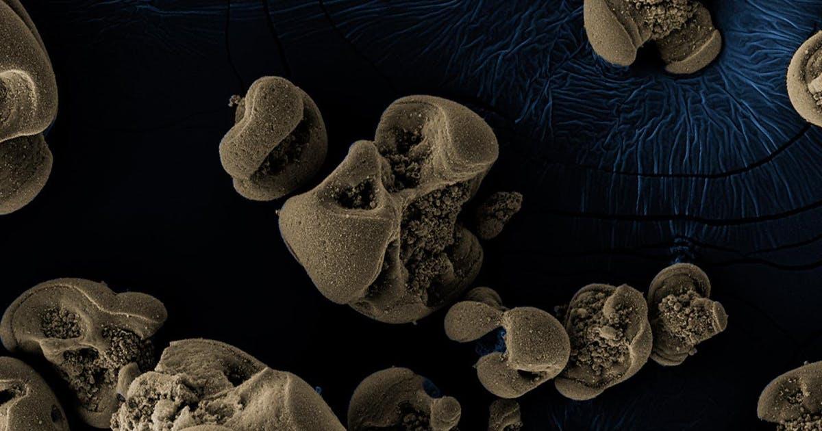 Durch Zufall entdeckt - neue Bakterien ernähren sich von Metall