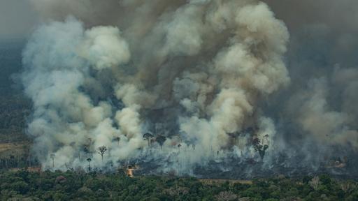 Brasilien: Bolsonaro setzt Brandrodung im Amazonasgebiet außer Kraft
