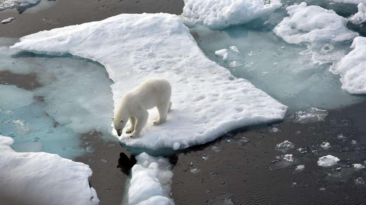 Das polare Eis ist wahrscheinlich viel früher verschwunden als ursprünglich angenommen: Der Klimawandel schafft ein schreckliches Szenario