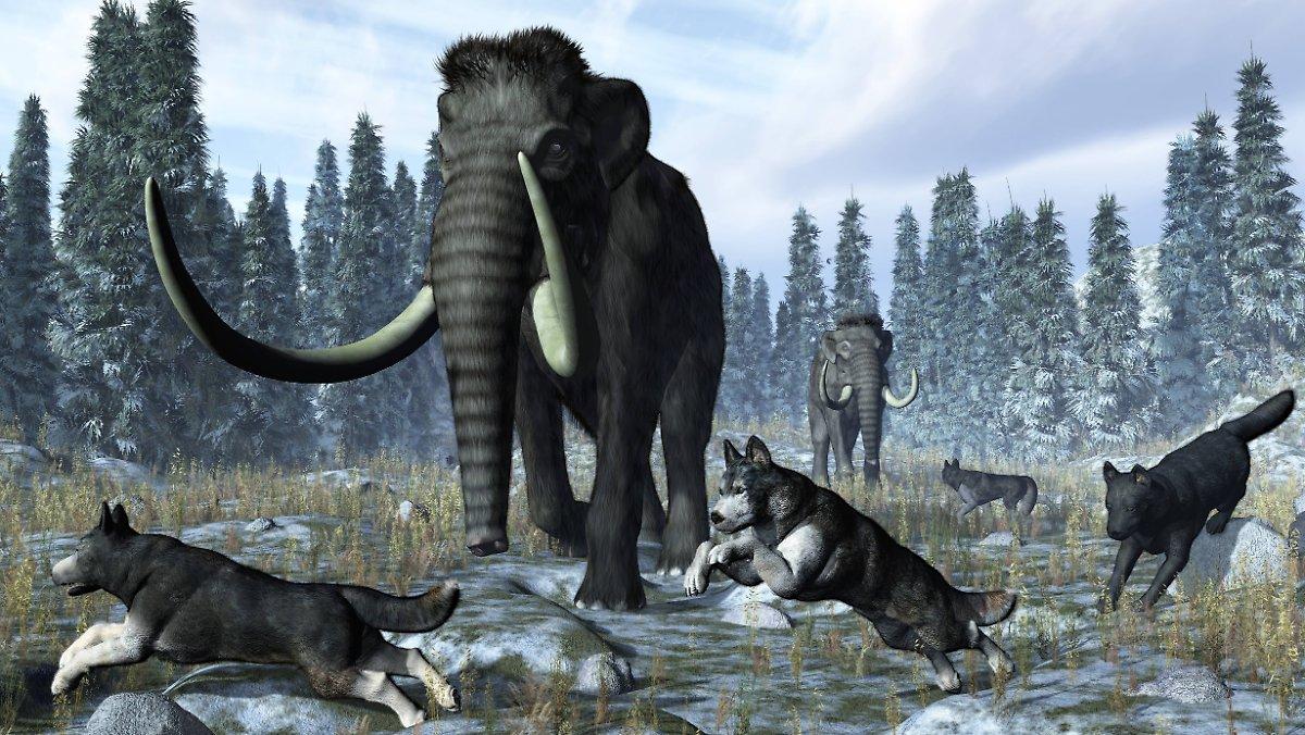Forscher geben eine genaue Zahl an: Es war in der letzten Eiszeit so bitterkalt