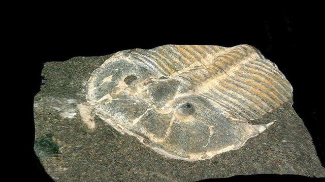 Alte Fossilien überraschen Forscher - Hunderte Millionen Jahre alt