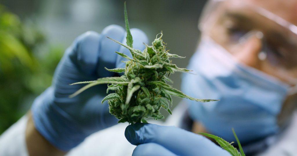 Der Inhaltsstoff Cannabis hat sich als wirksam gegen die Symptome von Parkinson erwiesen - Spezialportal Naturheilkunde & Naturheilkunde