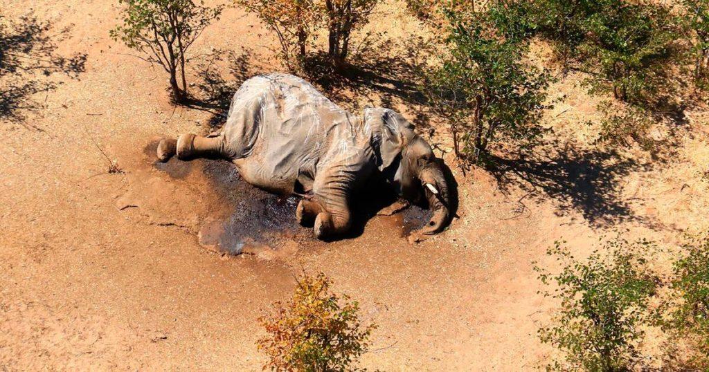 Botswana: Todesursache für Elefanten gut geklärt
