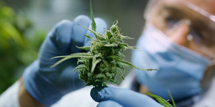 Cannabis Gegen Parkinson