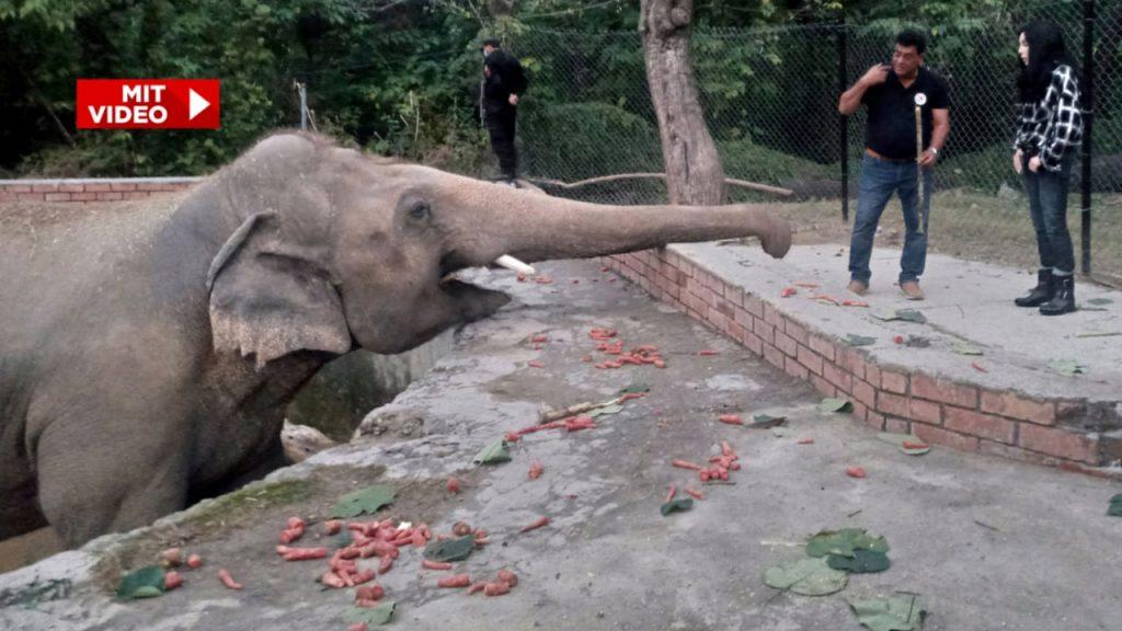 Cher rettet den einsamsten Elefanten der Welt - Menschen