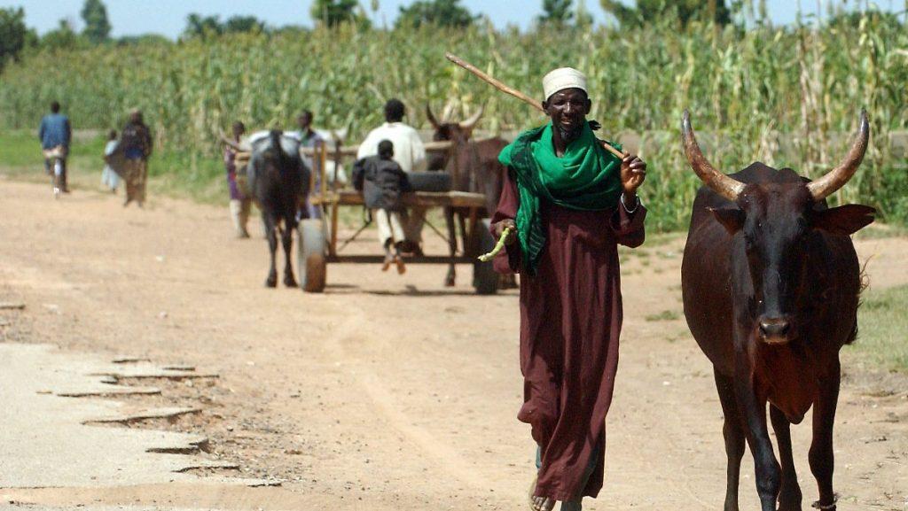 Boko Haram Terror in Nigeria: Islamisten exekutieren 43 Bauern