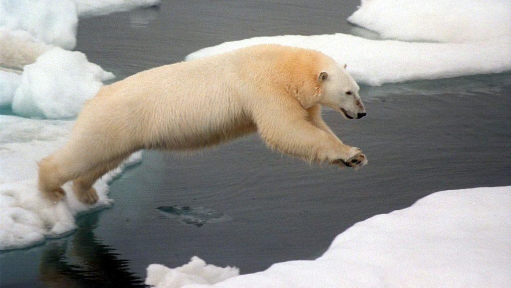 Eisbären in Kanada: Radar zur Warnung vor den Raubtieren – Experiment in der Arktis