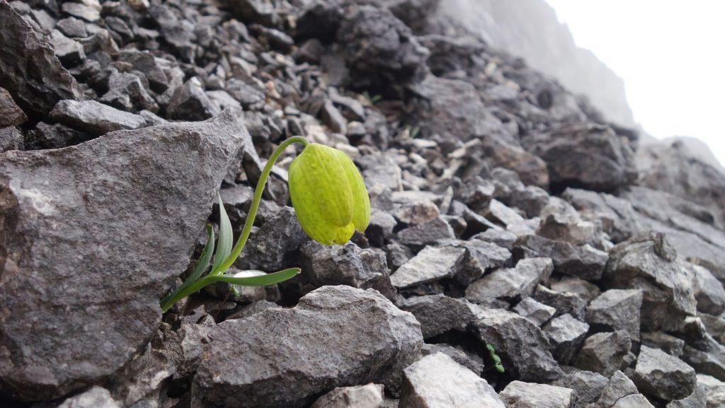 Evolution: Eine Pflanze macht sich für den Menschen unsichtbar