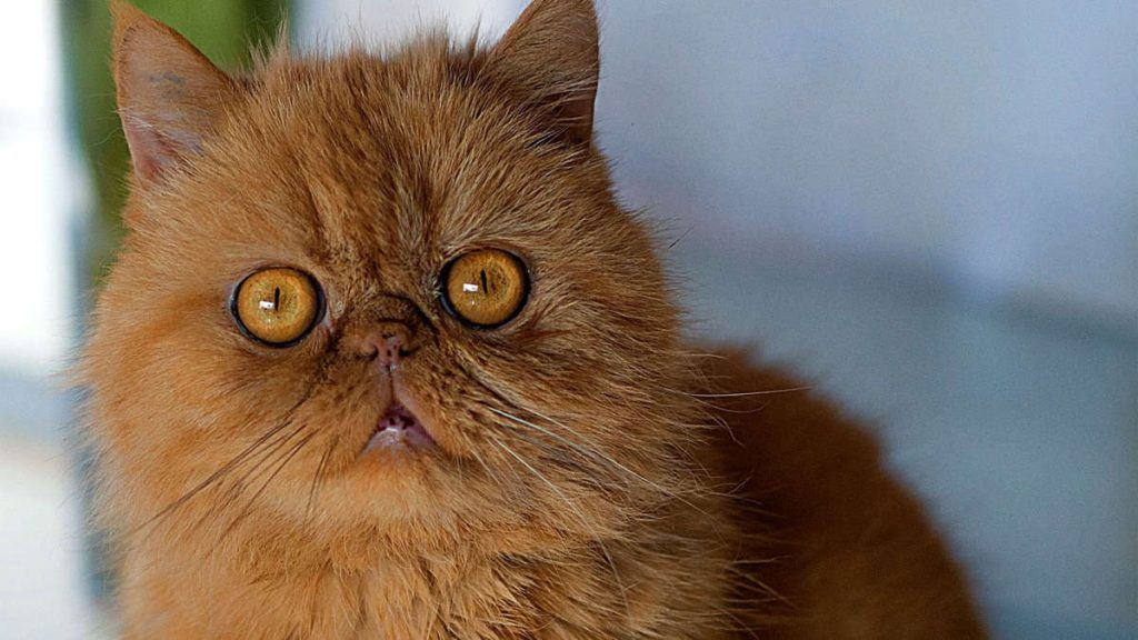 Rewe-Mitarbeiter hat Angst vor Katzen - seine Reaktion lässt die Herrin völlig ausflippen