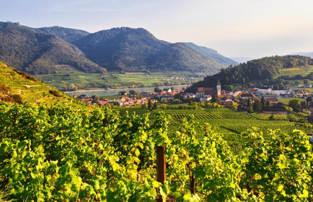 Die besten österreichischen Weine: vom Grünen Veltiner bis zum Riesling