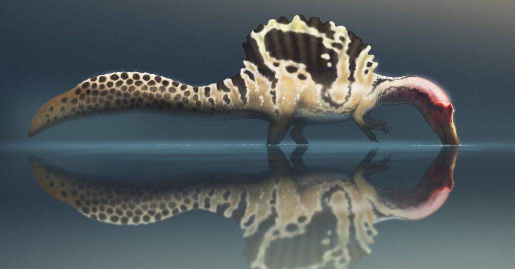 War der Spinosaurus ein Unterwasserkiller oder ein Riesenwader?