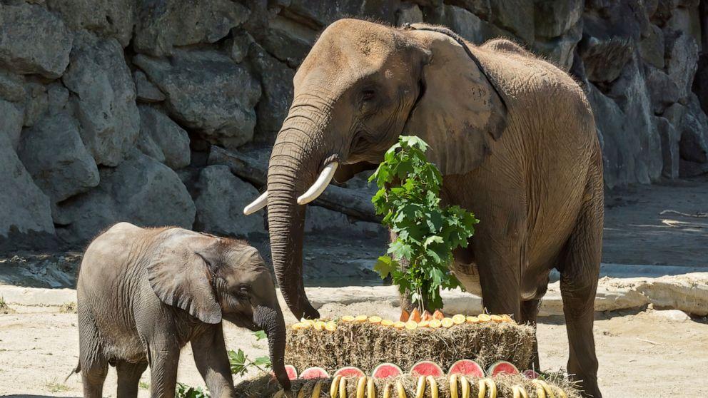 Der österreichische Minister dankt dem Elefanten, der das Virus geleitet hat