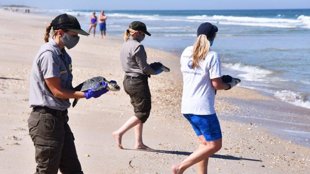 Rettung von Meeresschildkröten, die von der Kälte der NASA-Astronautin Nicole Stott betäubt wurden