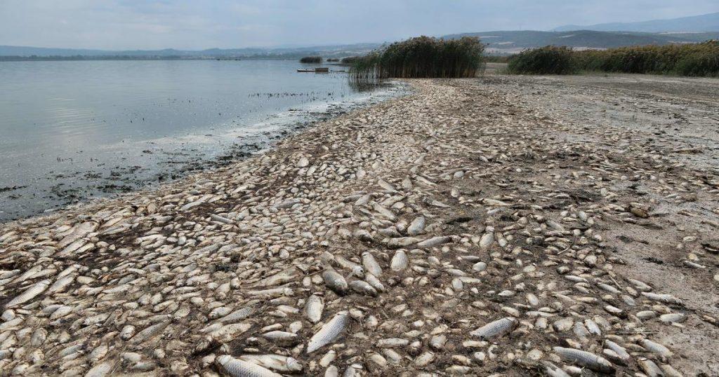 """Süßwasserfische in """"katastrophalem"""" Rückgang, wobei ein Drittel vom Aussterben bedroht ist, heißt es in dem Bericht"""