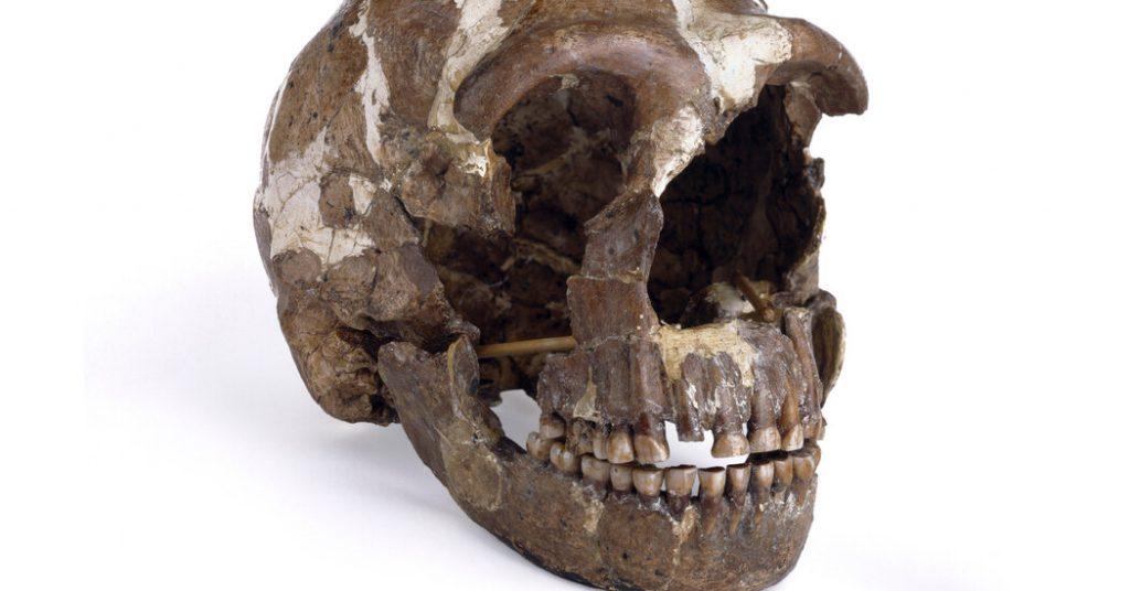 Neandertaler hörten der Welt wie wir zu