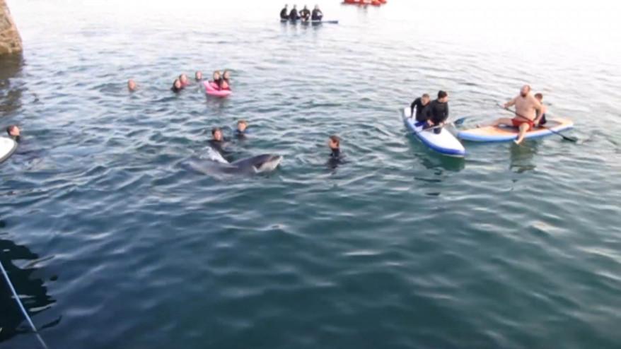 """Es mag nach Spaß und Spaß klingen, aber """"geliebt bis"""" Delfine können tatsächlich unbeabsichtigt Schaden anrichten."""