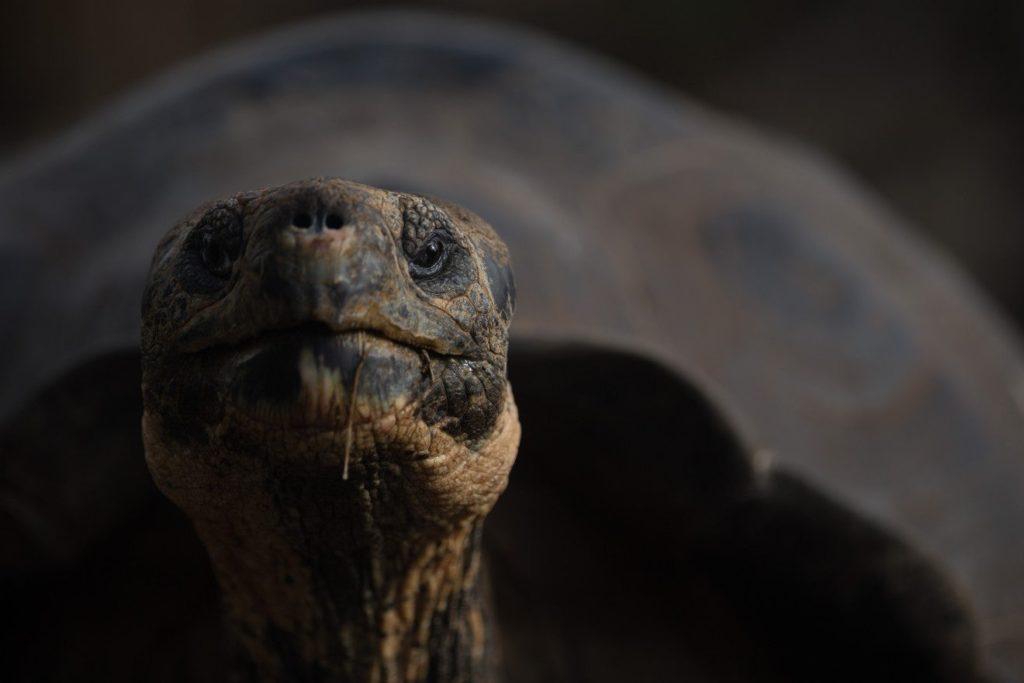 """In einem """"grausamen und unglaublichen"""" Video greift Riesenschildkröte an und verschlingt Babyvogel"""