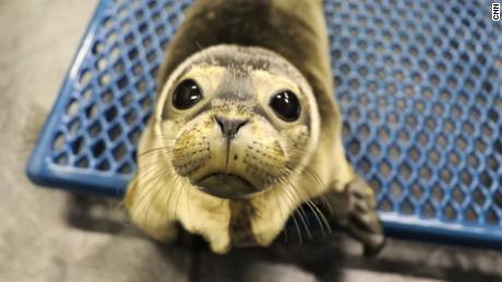 Wenn Maine Seals in Schwierigkeiten sind, bekommt sie den Anruf