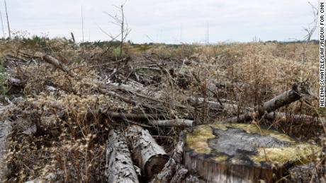 Dornröschens Wald stirbt.  Dies ist nicht die einzige Klimakrise, mit der die nächste Bundeskanzlerin konfrontiert ist