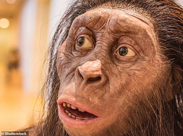 """Die """"Trachilos-Fußabdrücke"""" sind fast 2,5 Millionen Jahre älter als Spuren, die einer uralten vormenschlichen Art namens Australopithecus afarensis (Künstlerfoto) aus Laetoli in Tansania, Afrika, zugeschrieben werden.  A. afarensis ist die Art, zu der der berühmte menschliche Vorfahre 'Lucy' gehört"""