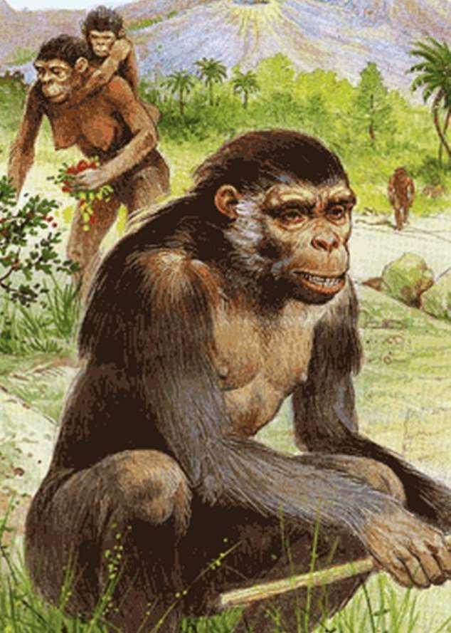 Künstlerische Darstellung von Orrorin tugenensis, ursprünglich aus Kenia, der vor 6,1 bis 5,8 Millionen Jahren lebte
